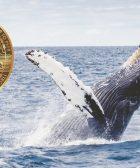 Bitcoin BTC ballenas 6500