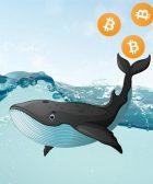 Bitcoin ballenas mueven 536 millones BTC